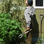 Prisionero jardinero